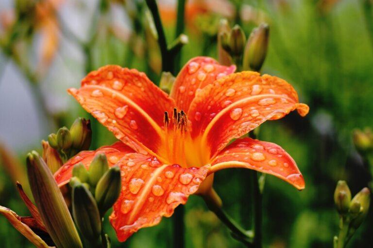 Gardening: Bloom in June
