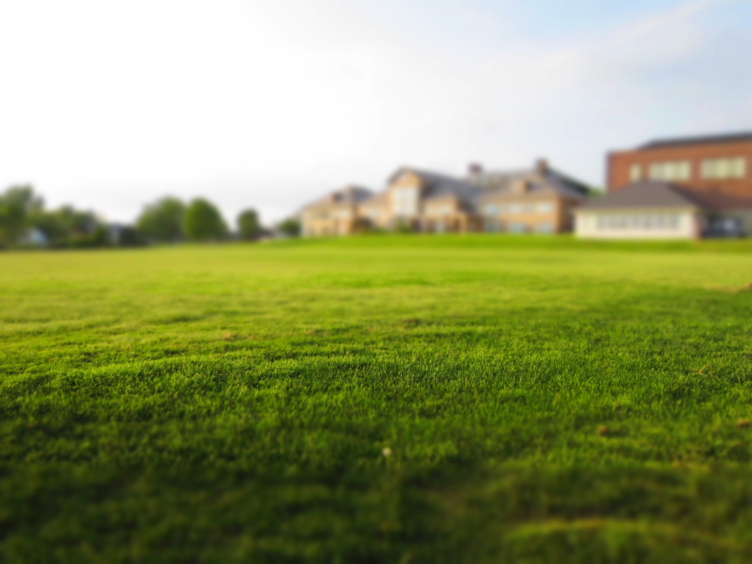 The Grass Is Greener…Or Is It?