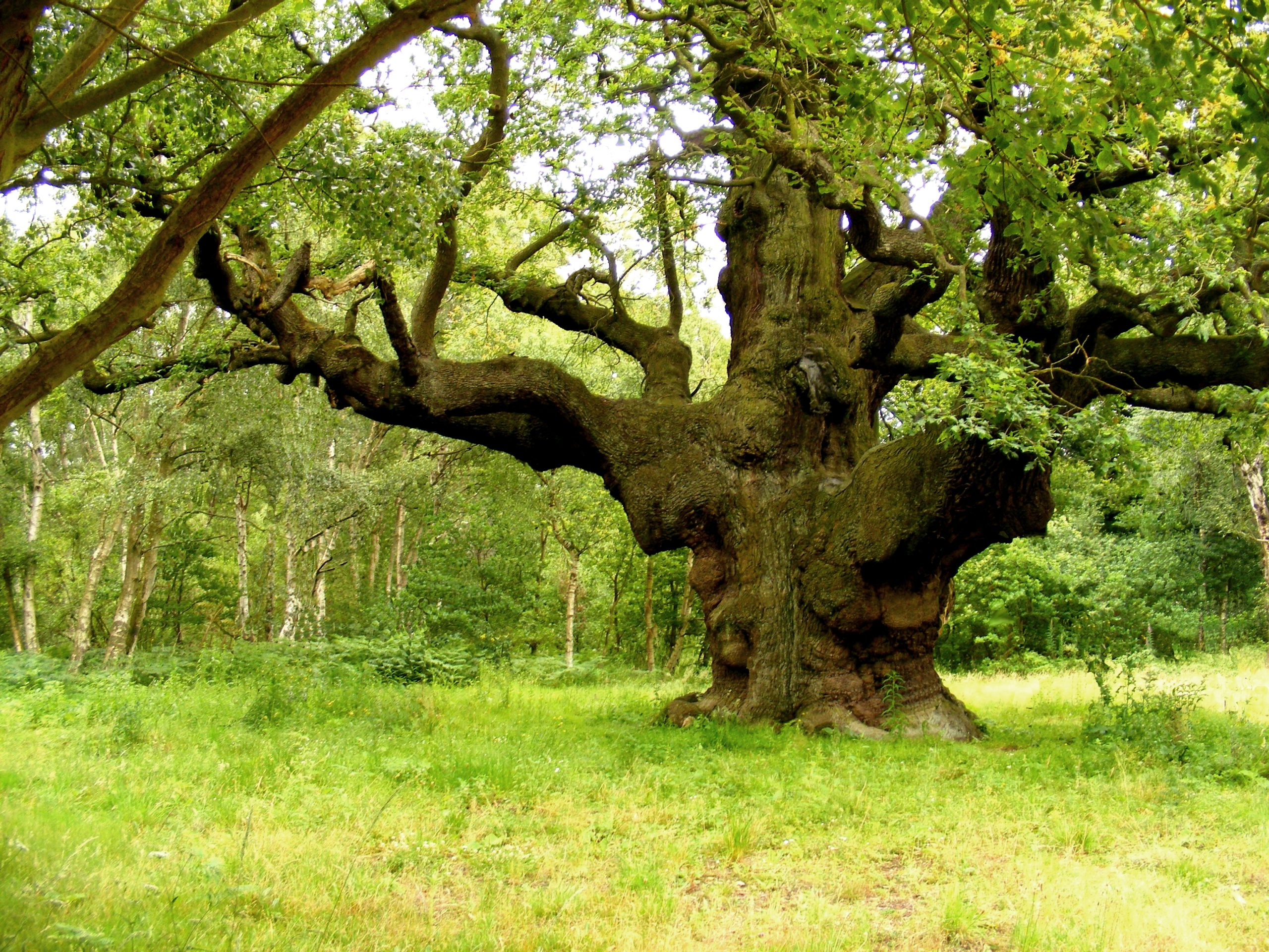 The Wood And The Trees: Visit The UK's National Forests
