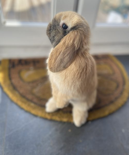 Ronnie our cheeky rabbit thinks he's a meerkat, forever standing on his back feet.