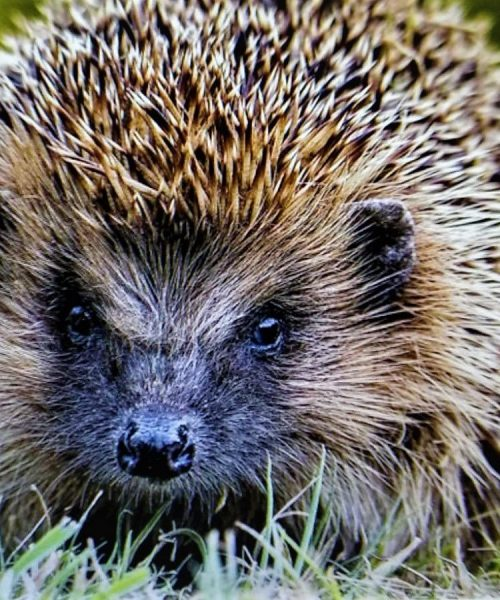 Spike by Rod Arthern - Canon Rebel T3 EOS 1100D