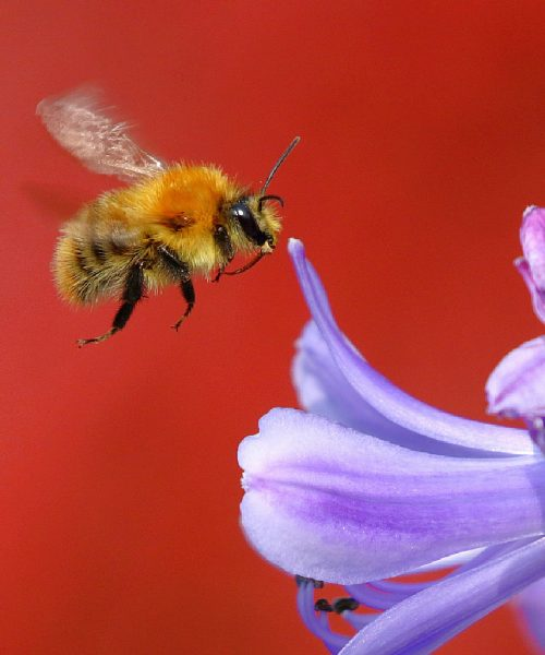 Making a Bee Line by Maurice Clegg - Canon 80D