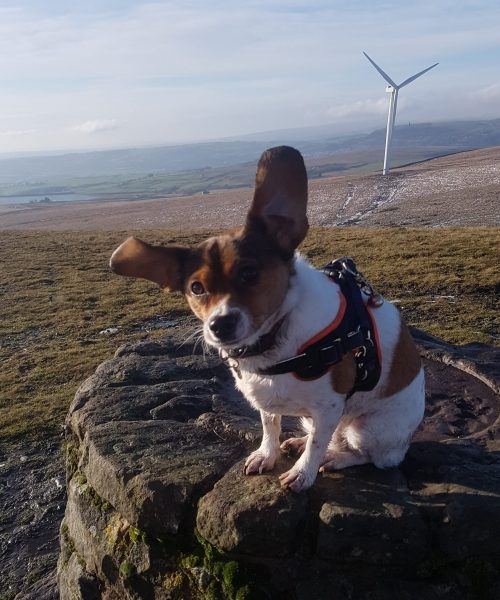 My dog Hope is ready for take off on the top of Knowl Hill!  Owner: Wendy Richings