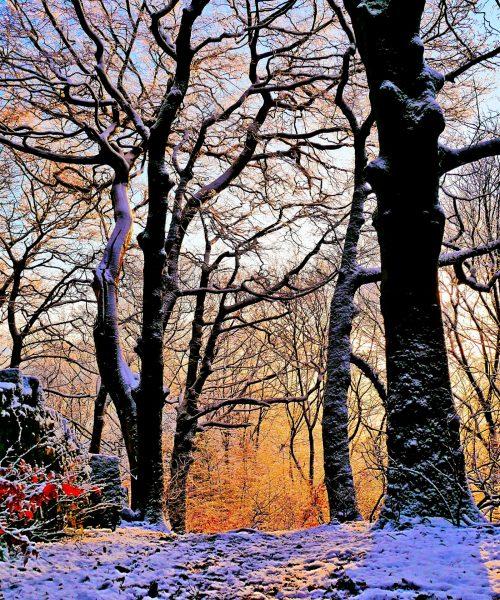 Snowy sunrise by Andy Donaldson - Panasonic GX9