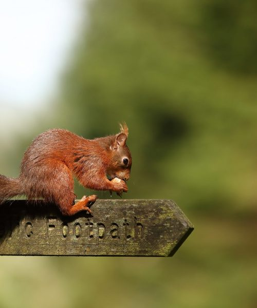Yorkshire Red by Len Heap - Canon 5D MK 1V