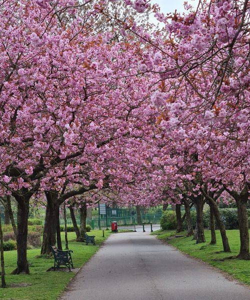 Lido Chesham in bloom by Sharon Williams - Samsung s20
