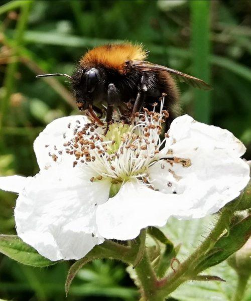 Busy Bee by Jackie Waters - Huawei P20