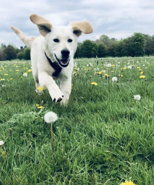 Lola the flying pup!